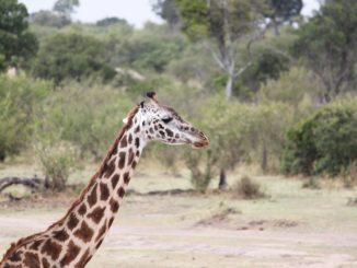 Exotická Tanzanie