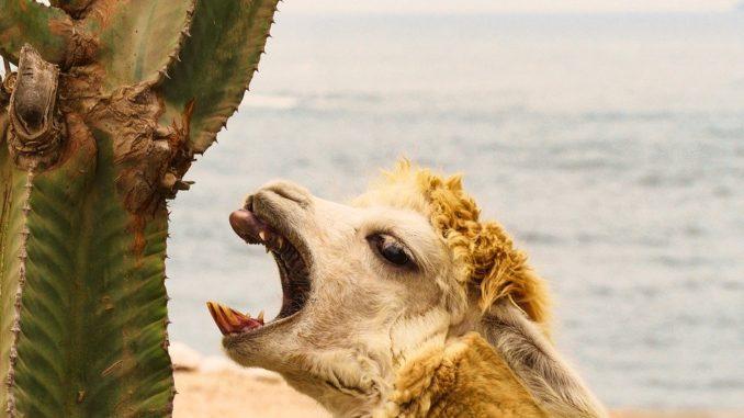 Největší zajímavosti o Peru. Nechte se oslnit